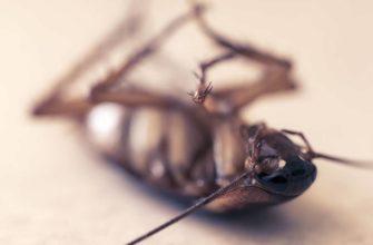 Лучшие средства от тараканов в квартире